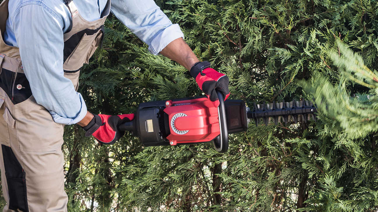 Close up of model trimming a hedge with Honda cordless leaf blower.